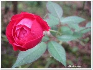 Memberikan Bunga : Tanda Cinta atau Rayuan Gombal??