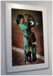 menggendong bayi orangutan