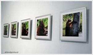 pameran fotografi orangutan